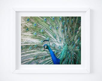 Peacock photo print - Mothers Day gift - Modern photography wall decor - Bird art - Large art -  Exotic wall art -Colorful green Wife gift