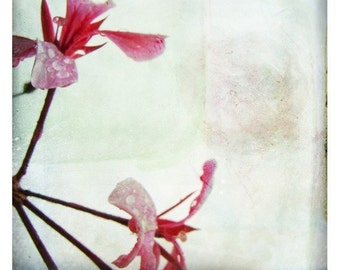 Simplement (Nature Photography - Fine Art Print - Geranium Flowers -  Botanical - Macro - Spring - Minimalist - Painting - Pink)