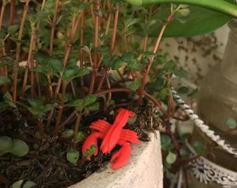 1 Miniature lobster for fairy garden /fairy pond / succulent / terrarium / mini garden