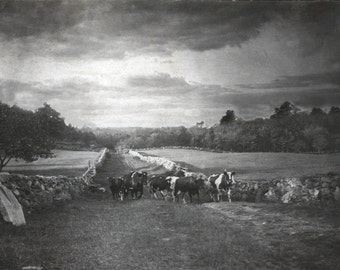 Til the Cows Come Home New Hampshire Countryside Landscape  Vintage Photo Print