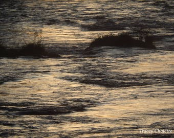 Nature Photography Matted 8x10 Evening on the River