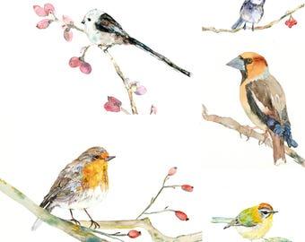 5 birds POSTCARDS, a set of 5 Unique postcards from wonderful watercolour illustrations, robin bird,tit, wall decoration, kids, home decor