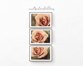 Vintage rose - photography print - natural - rose - rare print - hand-made, self-made, triptychon, 3 parts, natural, rual, wall decoration