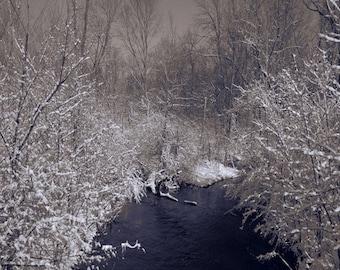 Snow art photography, Creek - White Trees, Sepia, Brown Wall decor