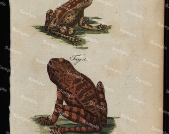 Amphibians hand colored engraving from Natural history of Buffon  dates 1790 Over 200 Years  (Fold out print)