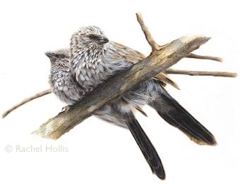 "8x10"" Apostlebirds - Australian Bird Print - Australian Native"
