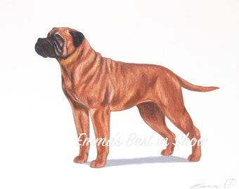 Bullmastiff Dog - Archival Fine Art Print - AKC Best in Show Champion - Breed Standard - Working Group - Original Art Print