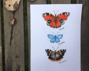 British Butterflies | A4 Print