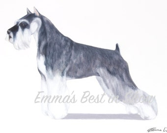 Miniature Schnauzer Terrier Dog - Archival Fine Art Print - AKC Best in Show Champion - Breed Standard - Terrier Group - Original Art Print