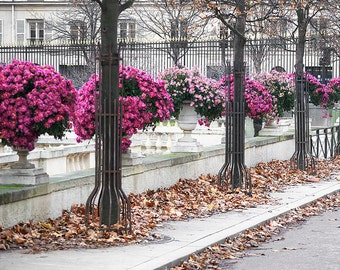 Paris Photography, Pink Mums Paris Print, Large Art Print Fine Art Photography, Gift for Her