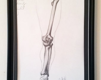 Original Artwork Skeletal Study in Charcoal - Gift - Art - New Year