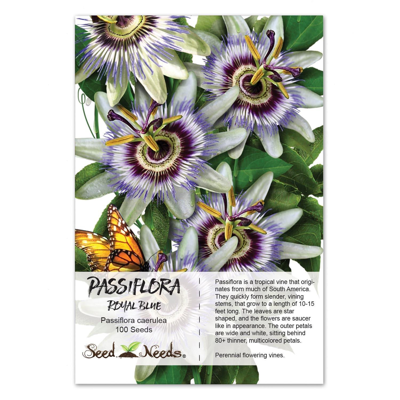 Passion Flower Seeds Royal Blue Passiflora Caerulea Open