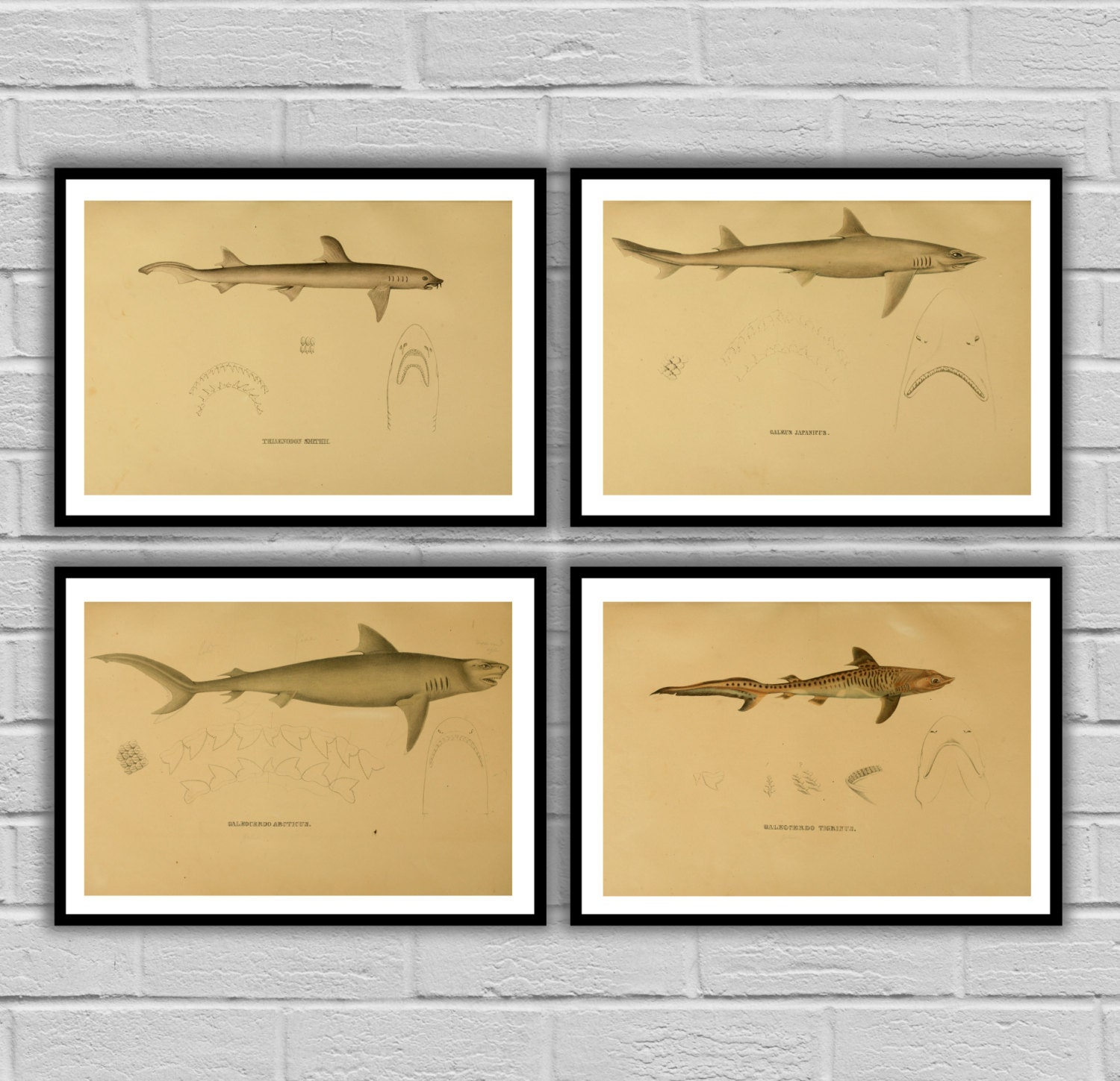 Shark Decor print, Set of 4, Boy\'s bedroom nautical Decor, Shark Art ...