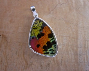 Real Madagascar Sunset Moth Pendant - Large Wing Shape - Insect gift science teacher love bug bright bold unique slide lepidoptera fly yes