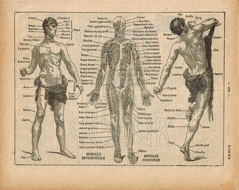 Vintage Anatomy 8x10 Download to Print, Human Body Muscles Male Figure 1920s French Medical Illustration, Wall Decor, Scrapbooking, Ephemera