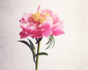 """Pfingstrose Druck, Botanik, minimalistisch, botanische Druck, rosa Pfingstrose Druck, Schlafzimmer-Wand-Kunst, Fine Art Fotografie """"Pfingstrose 14"""""""