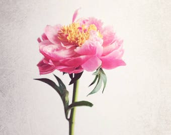 "Peony Print, Botanical Art, Minimalist, Botanical Print, Pink Peony Print, Bedroom Wall Art, Fine Art Photography ""Peony 14"""
