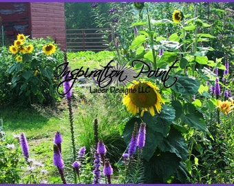 Sunflower Garden Photograph Art Print FREE SHIPPING!