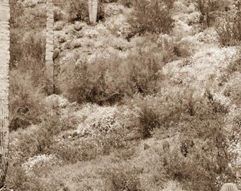 """Wild Burro print,Wild Horse Photo, Horse and Burro Photograph. Donkey photograph.""""Out in the wild"""""""