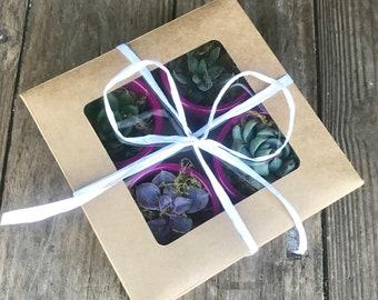 White Raffia Magenta Terra Cotta Pots - Succulent Gift Box Of 4