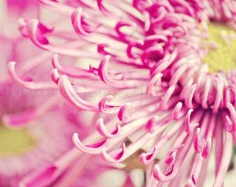 Pink Fuji Mum - Fine Art Flower Photography Print - Nursery Art - Pink Flower Decor - Floral Art Print - Bedroom Decor