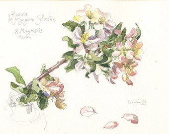 """Original Watercolor Apple Blossom, watercolor drawing. Botanical watercolor of blooming apple tree, 11.5"""" x 9"""" by Catalina"""