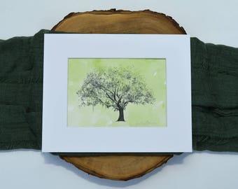 Oak Tree Ink Drawing with Watercolor Wash - Big Gordonston Oak - Savannah, Georgia