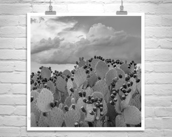 Cactus Print, Arizona Art, Prickly Pear, Desert Photography, Sonoran Desert, Cactus Art, Black and White, Square Art Print, Photo on Canvas