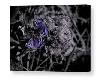 Blue Butterflies / wall art canvas print
