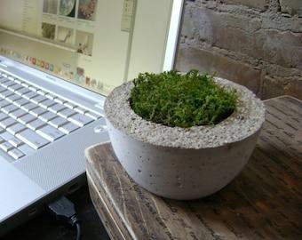 Little Moss Bowl