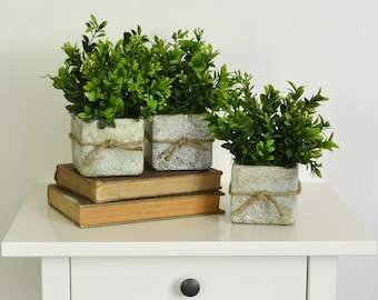 Three Rustic Pots of Boxwood, Spring Centerpiece, Boxwood Topiary, Rustic Centerpiece, Farmhouse Centerpiece, Rustic Containers