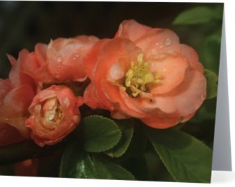 quince flower note card, note cards, greeting cards, block island note cards, blank note cards, block island, flower note cards, quince