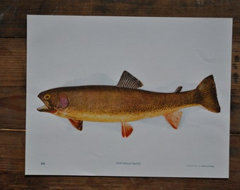 poisson cru print - Perry photos Nature imprime