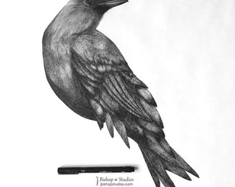 Fish Crow - Life Sized Original Ink Drawing - 20 x 24