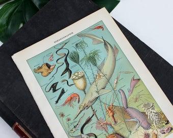 Vintage Poster mer vie mur, Sea Life estampes Art mural, océan impression, tirages d'époque, gravures anciennes, impression d'Art océan, océan oeuvre-E368
