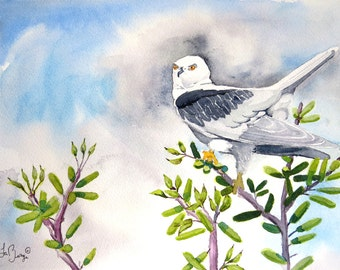 Wall Art Decor, Bird of Prey, White Tail Kite, Hawks, Original painting, Predators, Original, Watercolor paintings, Watercolorbymuren, 9x12