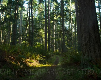 Digital download Trail in Pacific Northwest summer forest Fine art photography print Woodland landscape photography