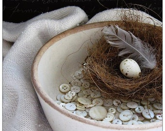 4 postcard set - bird nest