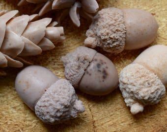 8 Acorn Soaps