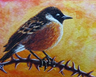Bird ACEO Giclee Print - STONECHAT - Wildlife Animal Chick Finch Berry Vine SFA Safyre Studios