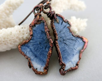 Blue Fossilized Coral Earrings, Electroformed Copper, Niobium Earwires