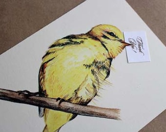 Illustrated Bird Thank You Notes