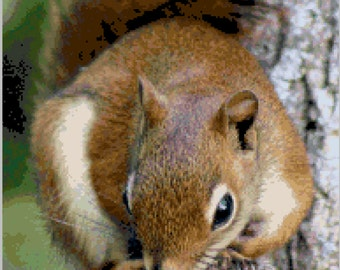 16 count PDF Pattern - Realistic Squirrel Counted Cross Stitch Pattern