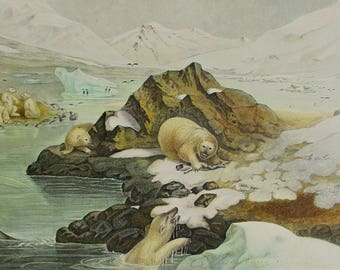 "1881 Polar Bears, ""Ours Blancs"". Antique Lithograph. Colorful, Original Natural History Print. Lackerbauer, La Monde de la Mer"