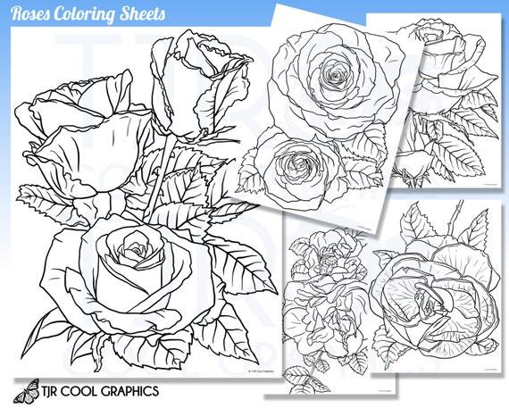 Rosas para colorear hojas adulto Digital realista JPG DIY