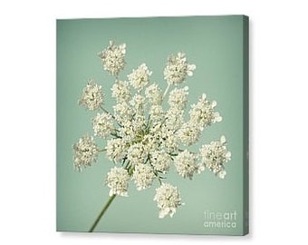 Queen Anne's Lace Canvas Print,  Square Botanical Print, Wall Art, Canvas Photography, Nature, Teal, Aqua, Mint Green, Chartreuse -NO. 1141