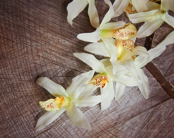 Orchid White Flowers ~100 pieces #100445