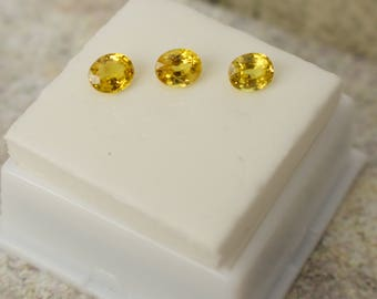 Gorgeous 0.70 Ct. Ave. Genuine 6x5 MM Flawless Yellow Sapphire Gemstones.