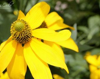 Yellow Flower Closeup Photography Print