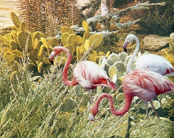 Urban Flamingos